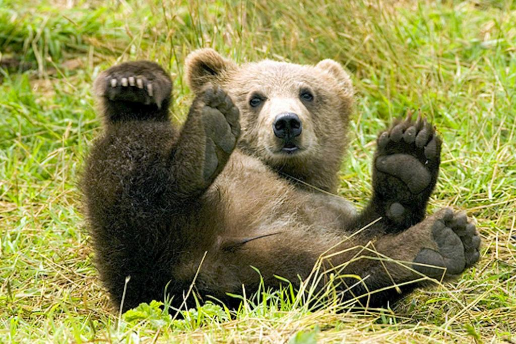Parco-Faunistico-Spormaggiore orso-trentino vacanza-natura-Andalo